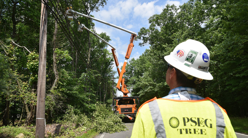 How Pruning Keeps Trees and Power Lines Happily Coexisting - Robert Wolf, Certified Arborist, Licensed Tree Expert and Vegetation Manager, PSE&G Distribution - July 20, 2018 PSEG Energize Blog